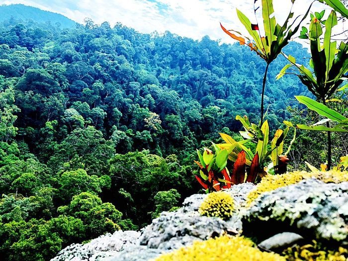 Forest Plant Beauty In Nature Growth Tree Nature Tranquility Day Green Color Scenics - Nature Mountain Outdoors