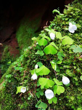 Flower Leaf Close-up Plant Green Color