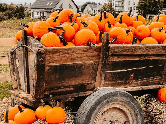 Orange pumpkins on field
