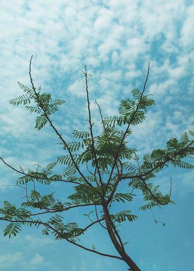 Tree Green Leaves Blue Sky