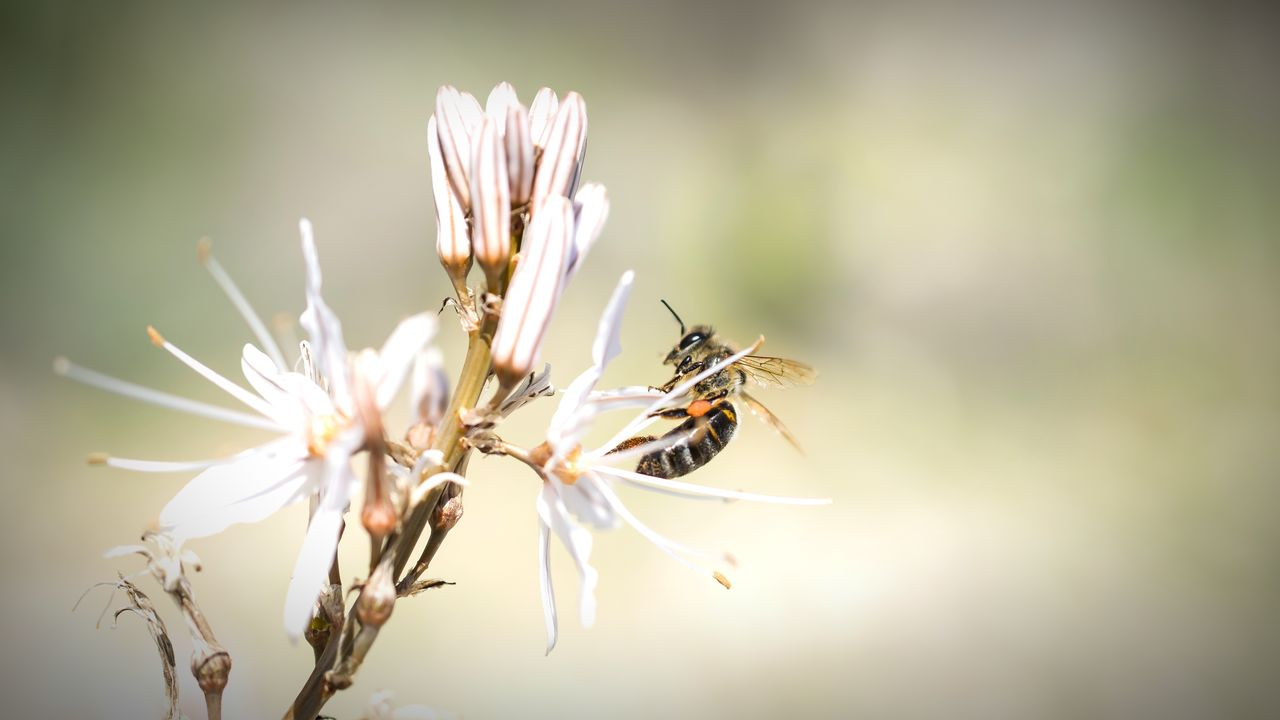 flower, insect, nature, one animal, fragility, animal themes, growth, beauty in nature, no people, plant, animals in the wild, petal, close-up, day, flower head, freshness, outdoors, pollination
