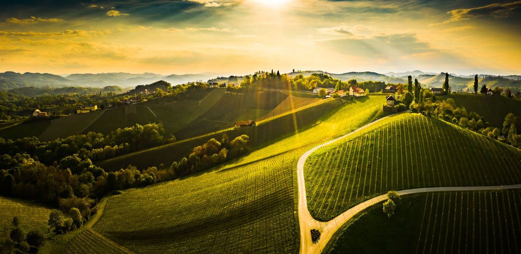 Panoramic view of agricultural field against sky during sunset. aerial view of austrian vineyards