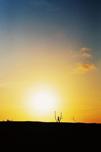 Sunset Silhouette Astronomy Bird Rural Scene Sky Countryside Dramatic Sky Atmospheric Mood Moody Sky Atmosphere Scenics Romantic Sky Idyllic Shining Sun