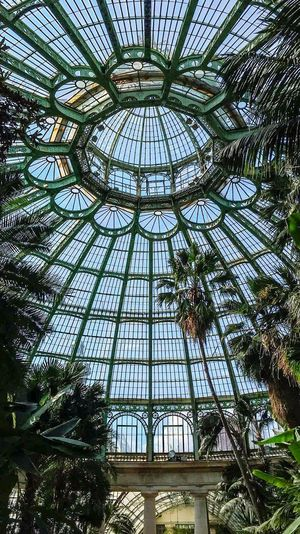 Serres De Laeken (Brussels). Brussels Greenhouse Architecture Low Angle View Tree Built Structure Plant Glass - Material No People Travel Destinations