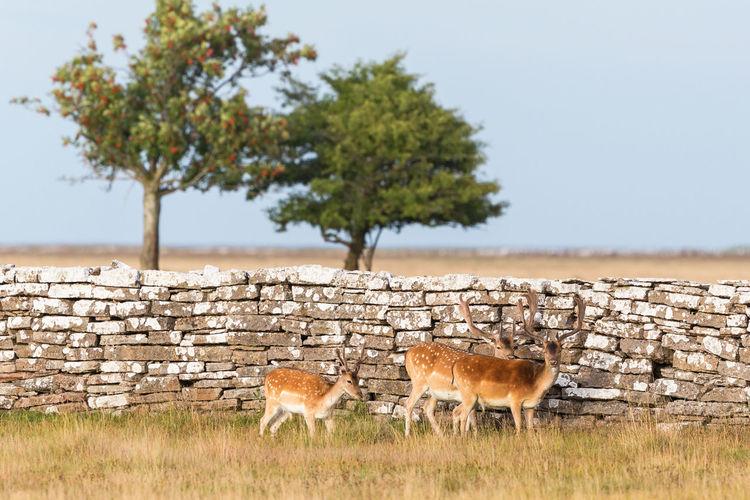 View of deer on field against sky