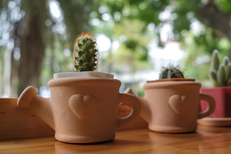 Table Plant Focus On Foreground Cup Close-up Tree No People Mug Still Life Food And Drink Wood - Material Drink Coffee Cup Day Indoors  Nature Coffee Refreshment Coffee - Drink Growth Crockery Tea Cup
