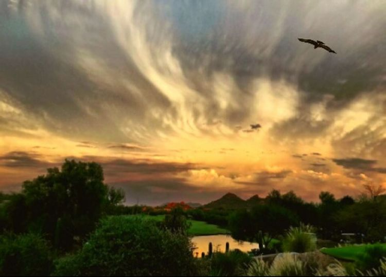 Sunset Cloud - Sky Flying Outdoors Rural Scene Tree Sky Nature Scenics Landscape Bird Grass Day Beauty In Nature Animal Themes Travel Destinations Freshness Environment Nature_collection Getty Images EyeEm Gallery Getty+EyeEm Collection Arizona Sunset Sunset Silhouettes Physical Geography