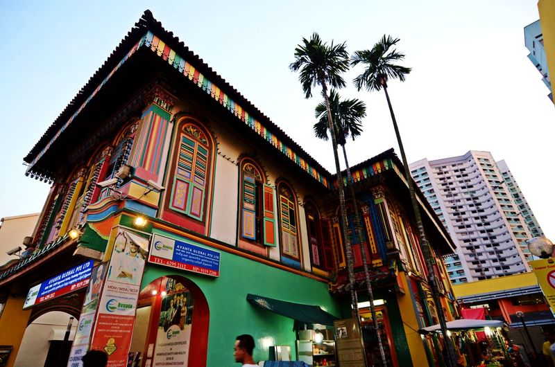 Architecture Building And Palm Tree Building Exterior Building Of Singapore City Coloured Buildings Corner Of Building Day Illuminated Low Angle View Multicolor Houses No People Outdoors Rainbow Building Rainbow Wall Singaporestreetphotography Sky Street Art Street Art Photography Streetphotography Travel Destinations Tree