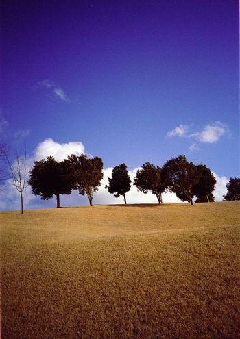 Lomo LC-A に ネガフィルム を入れて写した写真。同じ写真を一度投稿してるけど、今度はスキャンした状態で何も手を加えてなやつです。(-。-; Nature Filmcamera