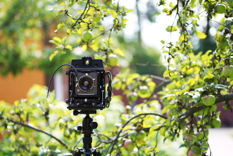 Close-up of camera on tree against plants