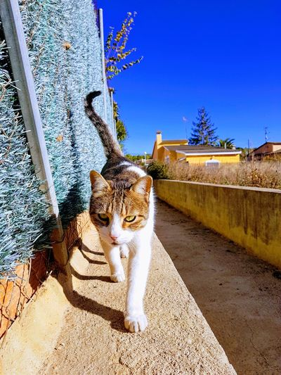 Portrait of cat sitting on retaining wall against clear sky