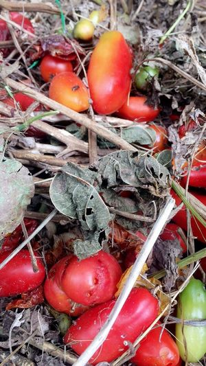 Beauty in the Compost Pile Perspectives On Nature