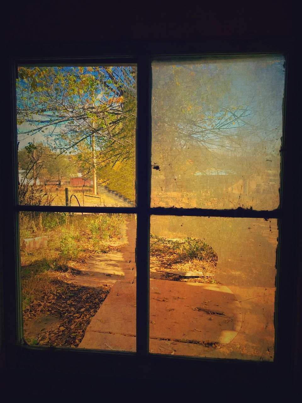 tree, window, no people, day, sky, indoors, architecture, nature, close-up