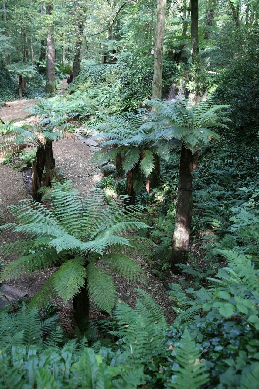 nature, growth, green color, tranquility, no people, tranquil scene, day, beauty in nature, plant, outdoors, leaf, fern, scenics, forest, tree