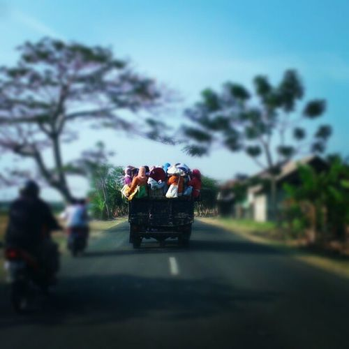 Tradition of INDONESIAn people.. Life to work... Farmer Life.