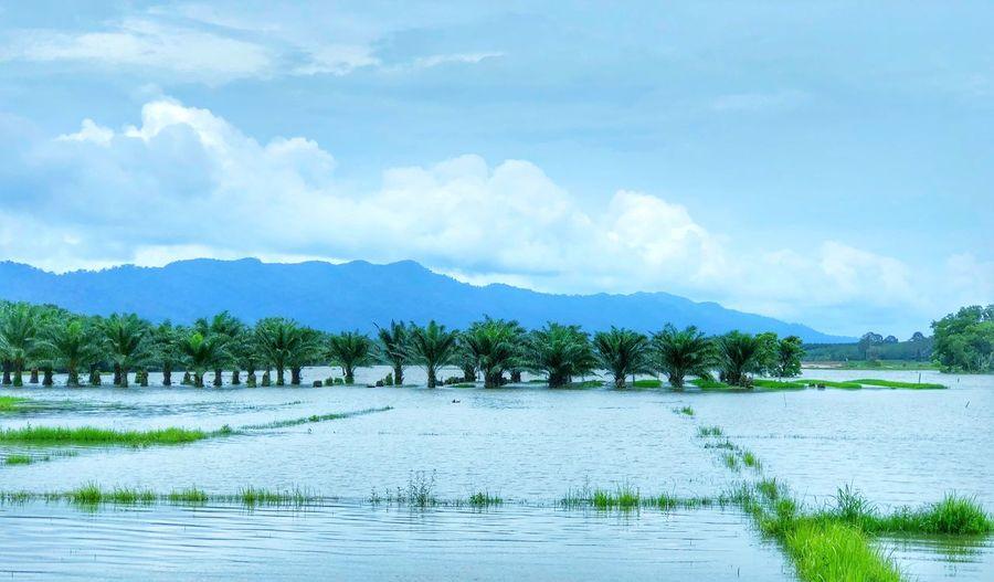 Flood field
