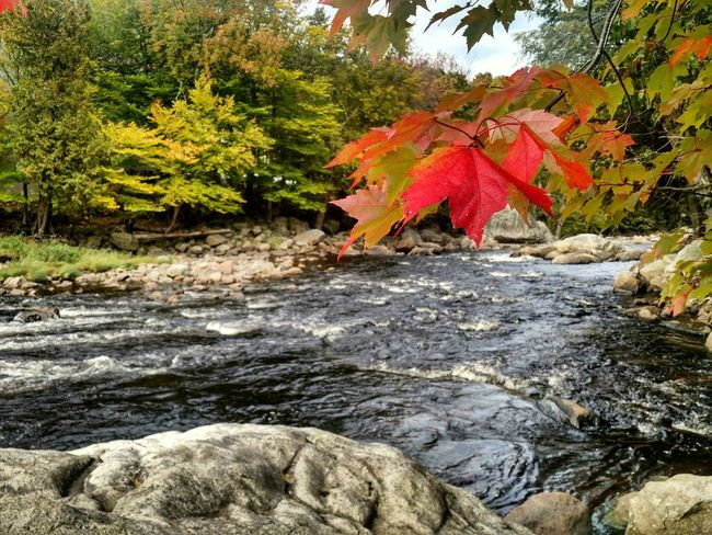 Ausable River Fall Adirondacks River Fly Fishing Whiteface Mountains Adventure Brown Trout Rainbow Trout Brook Trout Hiking