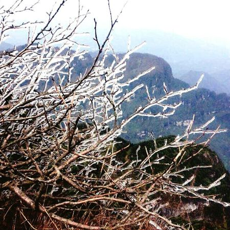 Outdoors Branch Frozen Nature Mountain Cold Temperature Mount Emei