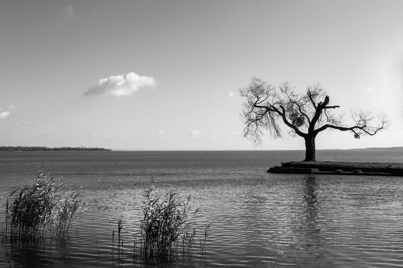 Black and white Blackandwhite Monochrome EyeEm New Here EyeEm Best Shots - Black + White Reflection Seascape EyeEm Nature Lover Tree Bare Tree Water Sky Landscape Cloud - Sky Single Tree Horizon Over Water