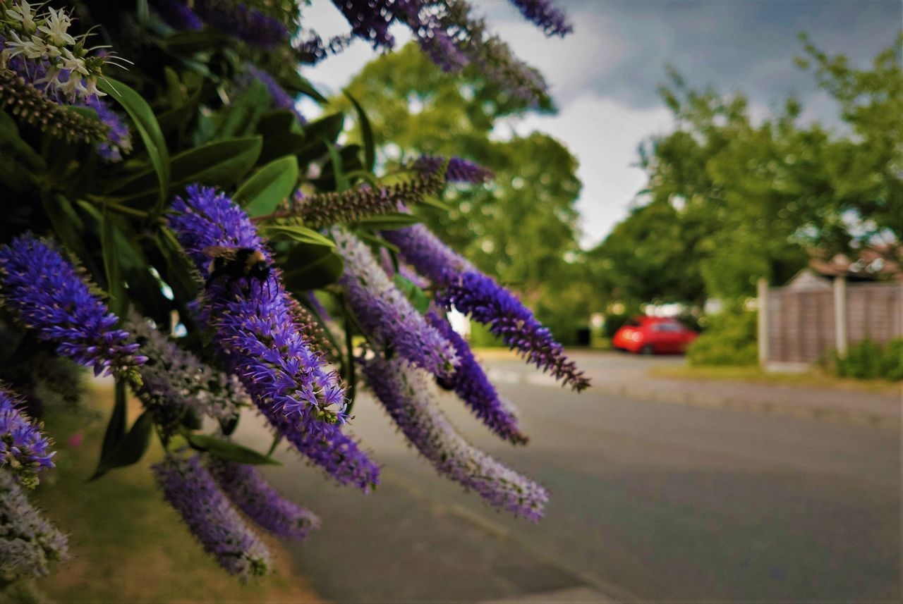 growth, purple, flower, nature, plant, beauty in nature, selective focus, no people, day, outdoors, fragility, tree, close-up, freshness