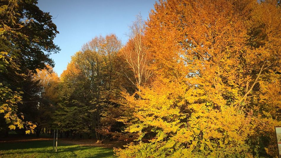 Greenery EyeEm Nature Lover Autumn🍁🍁🍁 Urban Nature Autumn Leaves Leaves Autumn Colors Autumn