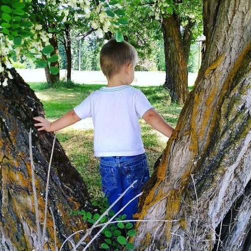 Trees Tree Boy Little Boy Tree Child Childhood Grass Kid Young Little Preschooler Backyard Growing Alone Single Toddler  Yard