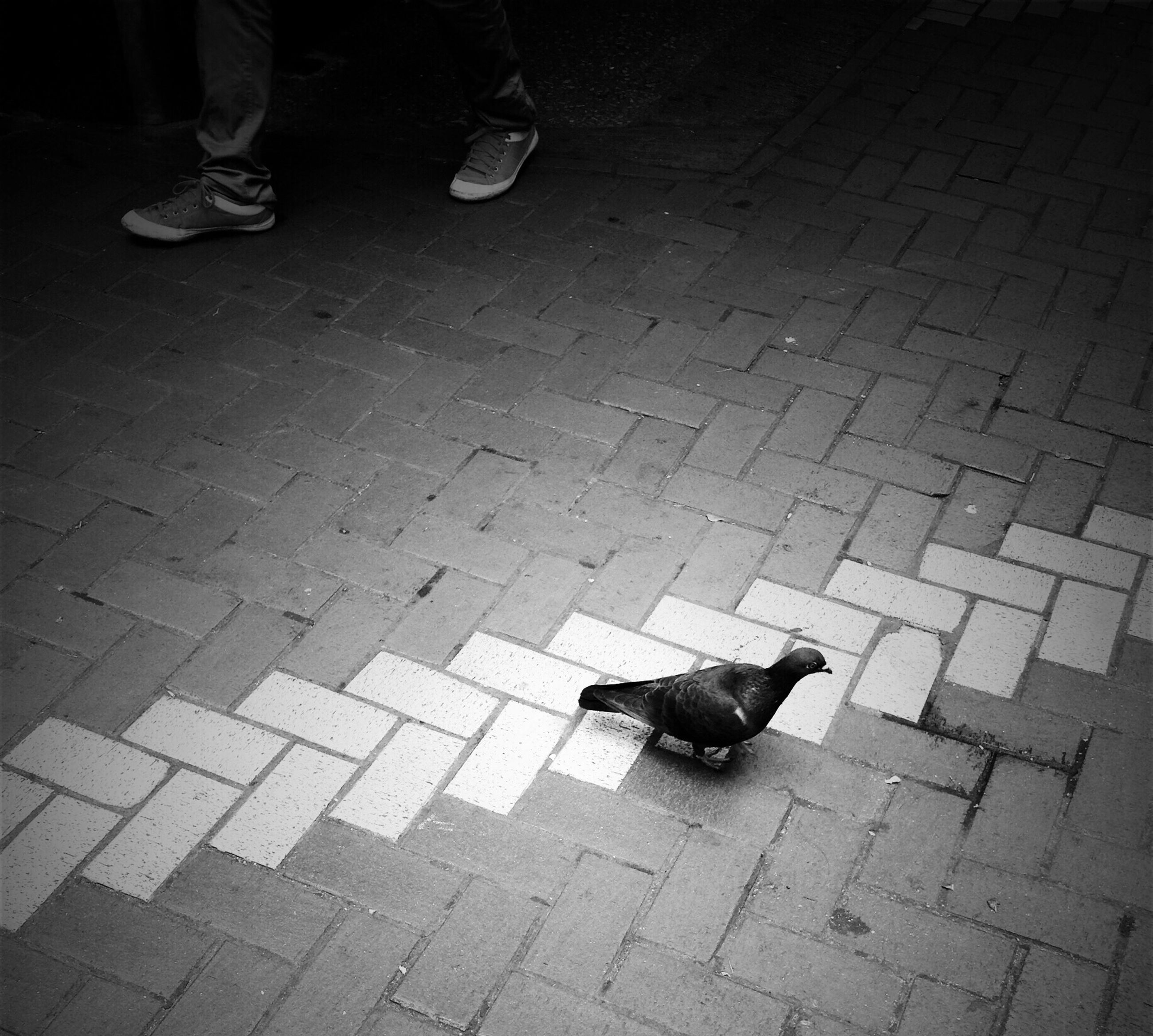 animal themes, one animal, domestic animals, pets, high angle view, low section, dog, mammal, street, shoe, person, sunlight, sidewalk, cobblestone, paving stone, shadow, outdoors, footpath