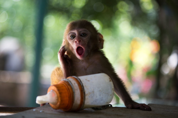 Monkey Sitting At Zoo