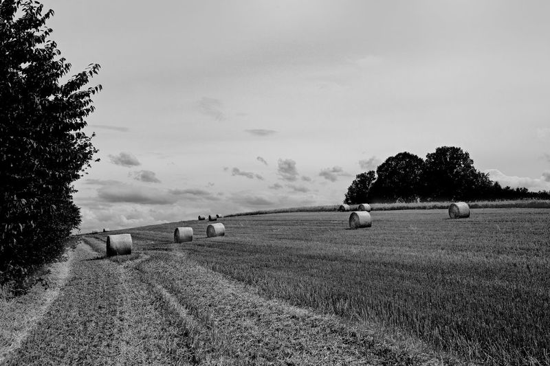 Plant Sky Tree Field Agriculture Landscape Grass Land Environment Nature Rural Scene Farm Bale  Tranquil Scene Hay No People Tranquility Day Growth Scenics - Nature Outdoors Stoppelfelder Nach Der Ernte Rundstrohballen