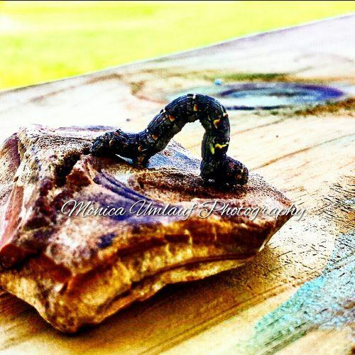 Catapillar Catapiller Buddies Nature Wildlife & Nature Country Life Nature Photography Outside World Abugslife