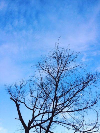 Blue sky First Eyeem Photo