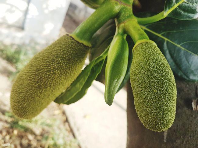 Kater Satisfaction Freshness Focus On Foreground Food Tree Nature Patna Pintu