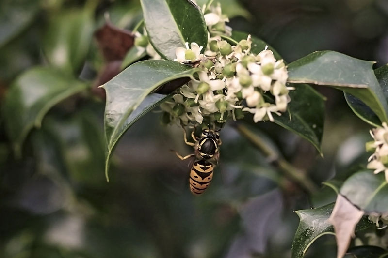 Close-up of butterfly pollinating on plant