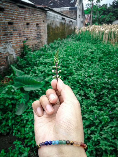 Cropped hand of woman holding plant