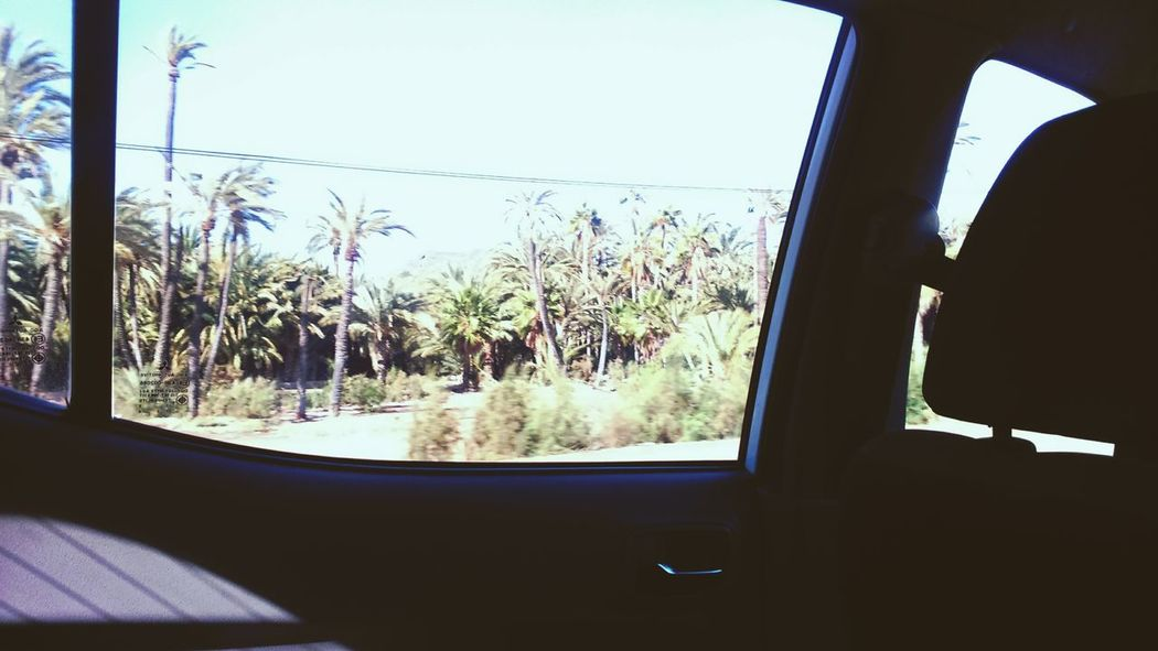 Palms Trees Window View Car Travel Having Fun