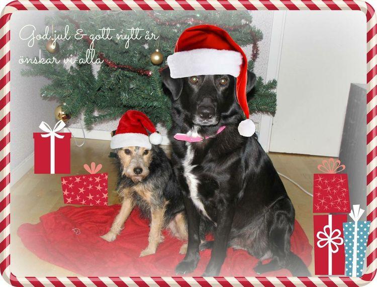 Mary Christmas Mydog♡ Ilovemydogs Christmas Dogs