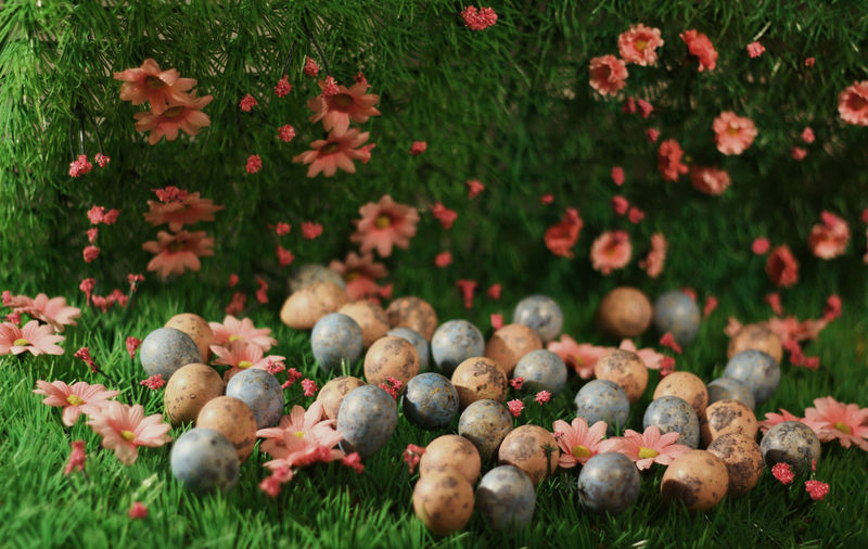 High Angle View Of Eggs By Flowers On Grassy Field