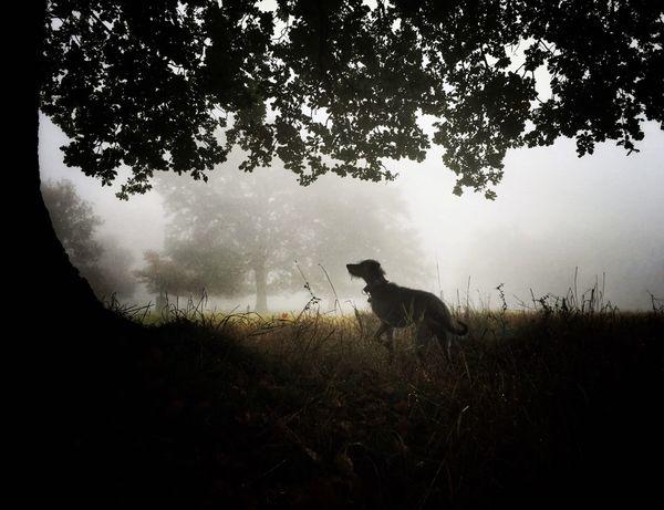 LEO... The One Eyed Lurcher... I Love My Dog ❤ Lurcher Animal Photography Animal Portrait Sighthound Bushy Park Live For The Story