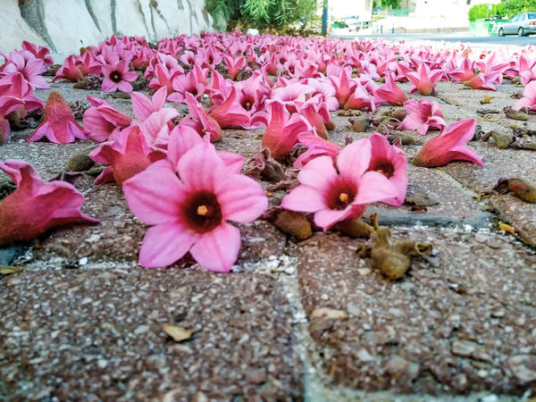 Color PaletteNature's Diversities - 2016 EyeEm Awards Flower Photography Flwor Nature's Diversities F Pink Flowers Pink Color Purple F Purple Flower Nature_collection Flwoers Best Photo2016