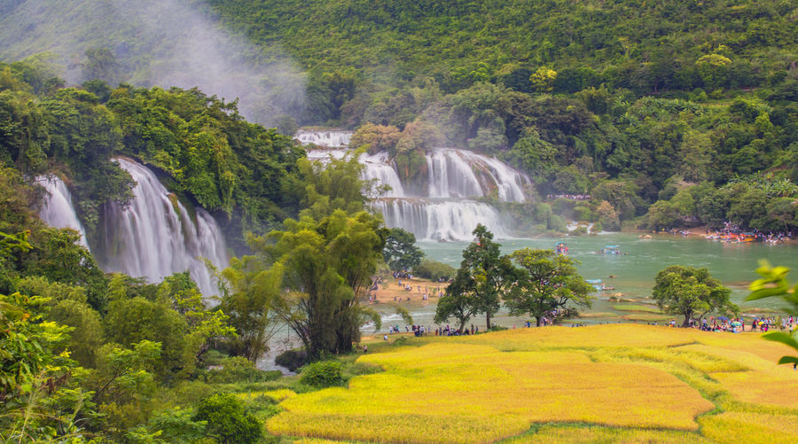 Bản Giốc warterfall Beauty In Nature Day Flowing Water Growth Plant Tree Water Waterfall