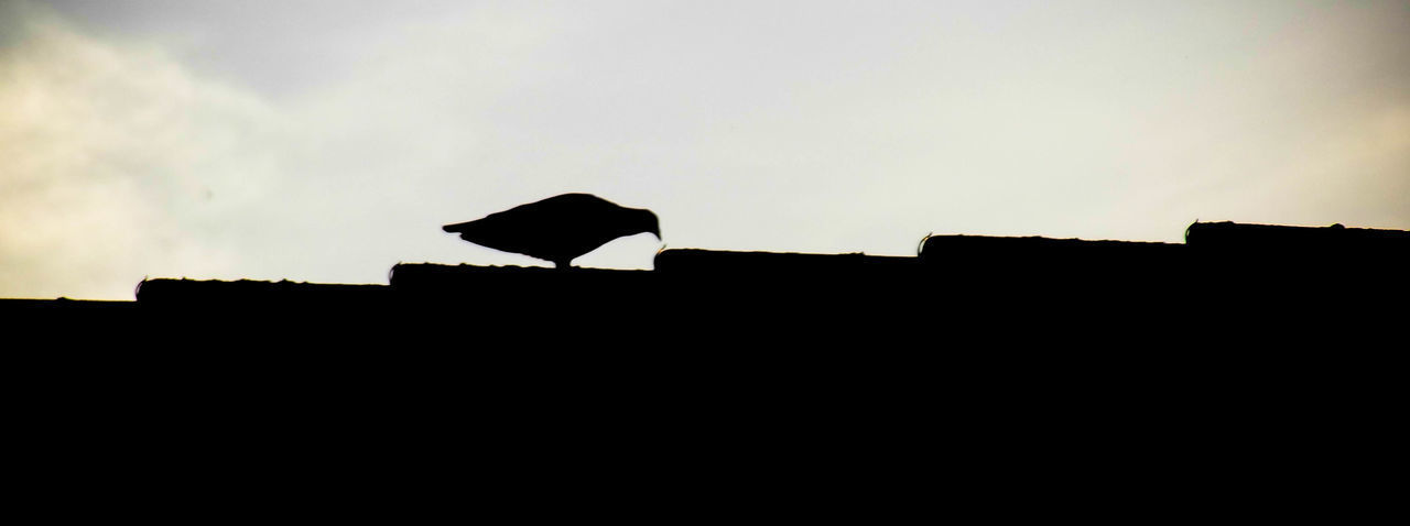 Animal Animal Themes Animal Wildlife Animals Animals In The Wild Architecture Bird Bird Photography Birds Birds Of EyeEm  Birds_collection Black And White Building Exterior Built Structure Fujifilm HDR Low Angle View Nature Outdoors Perching Pigeon Raven - Bird Roof Silhouette Sky