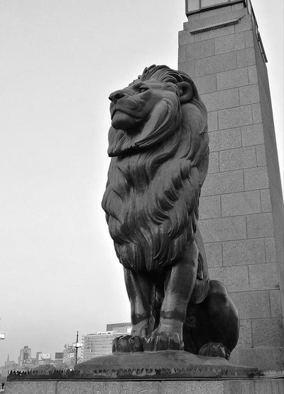 Here it stands for years, always full of pride. 👌 Statue Sculpture Outdoors Travel Destinations No People History Built Structure Lion Kasr El Neel Cairo Egypt Mobilephotography Mobile_photographer Mobile Streetphotography