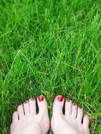 One sweet treat of summer: barefoot in the grass. Life is good! Female Feet Beauty In Ordinary Things Summertime Unedited Color Photo Different Perspective I Love Summer My Feet In The Green Grass Low Section Nail Polish Red Human Leg barefoot Human Foot Toenail Close-up Pedicure Toe Red Nail Polish Human Feet Human Toe Nail Varnish My Best Photo The Mobile Photographer - 2019 EyeEm Awards The Great Outdoors - 2019 EyeEm Awards The Minimalist - 2019 EyeEm Awards