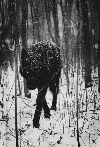 Wolf Snow ❄ feel Taking Photos Diffrent