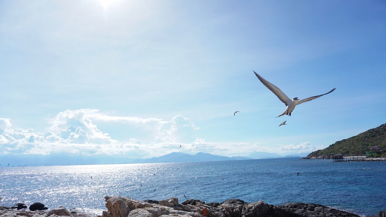 water, sea, sky, animal wildlife, flying, animal, animal themes, animals in the wild, vertebrate, spread wings, bird, beauty in nature, scenics - nature, nature, one animal, tranquil scene, day, seagull, mid-air, no people, horizon over water, outdoors, marine