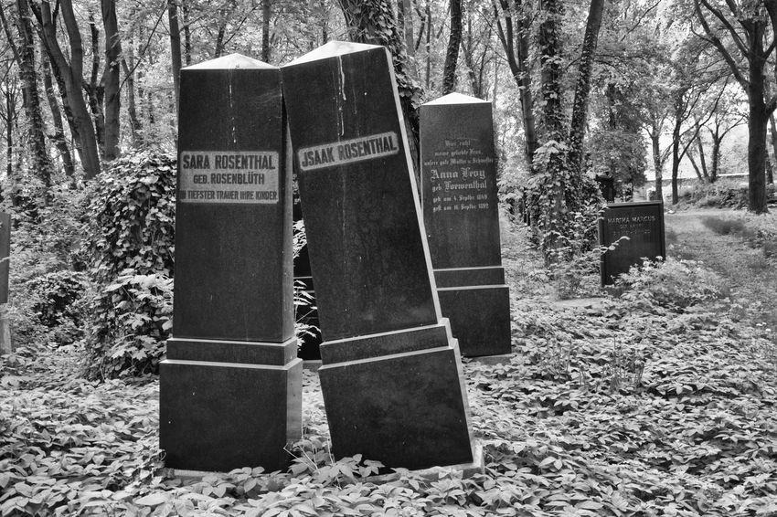 Berlin Weißensee Black-white Photo Cemetary Expired Jewish Cemetery Nature No People Outdoors