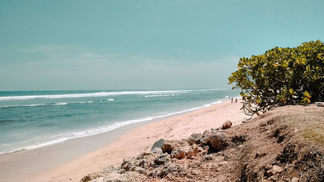 Tree Wave Water Sea Beach Sand Summer Water's Edge Blue Sky