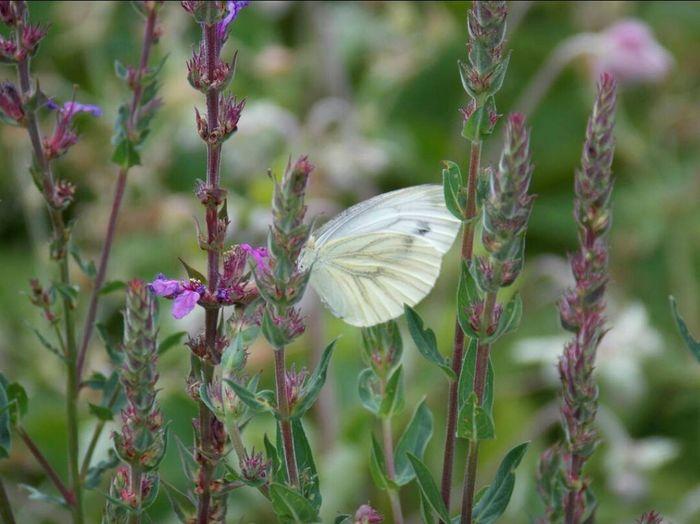 Butterflies Flower Photography Naturelovers Nature Photography Naturelover Enjoying Life Enjoy Nature