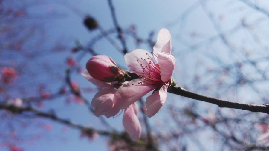 Flower Nature Close-up Outdoors Plant No People Flower Head Pink Color Growth Beauty In Nature Freshness Day
