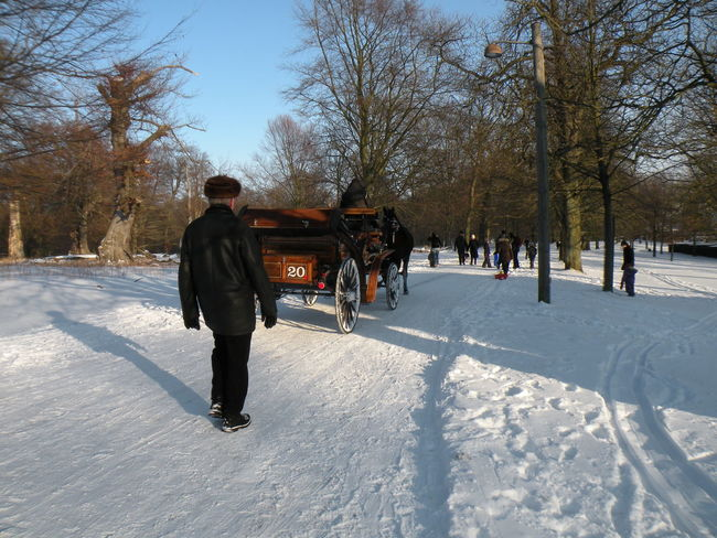 Winter Snow Cold Temperature Rear View Tree Bare Tree One Person Weather Real People Day Full Length Warm Clothing Lifestyles Outdoors Nature People Men Adults Only Only Men One Man Only Jægersborg Dyrehave Dyrehaven - in Jægersborg Deer Park in Klampenborg, Denmark